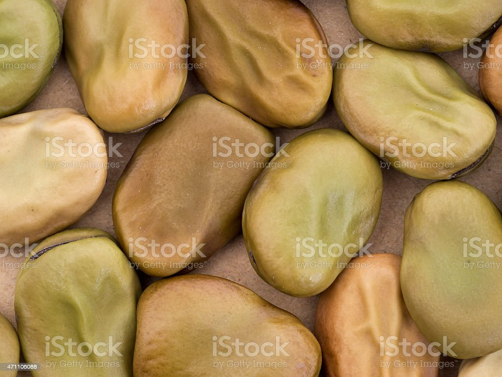 Broad bean seeds - red flower variety. Vicia faba. stock photo