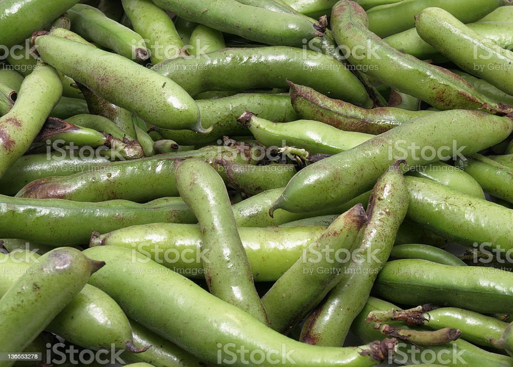 Broad Beans fresh from the Garden royalty-free stock photo