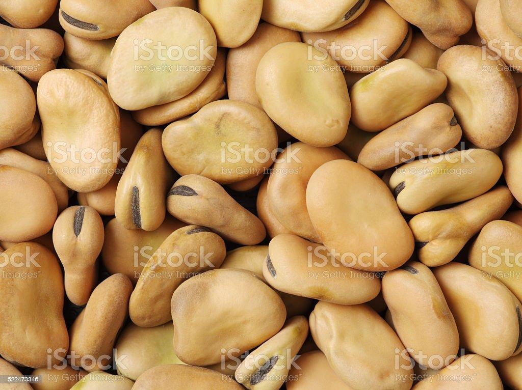 Broad beans macro stock photo