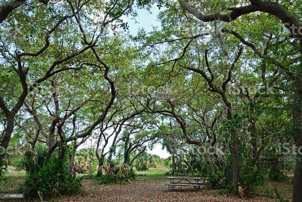 Broad pathway under arched tree branches stock photo