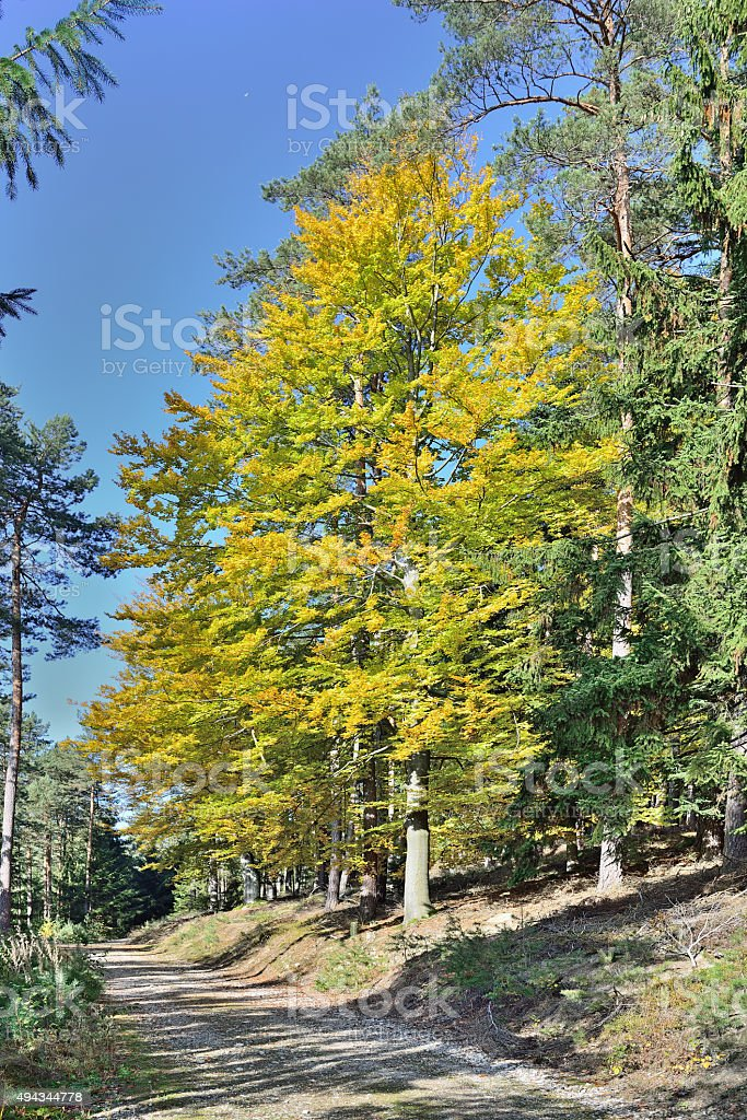 broad-leaved tree in fall stock photo