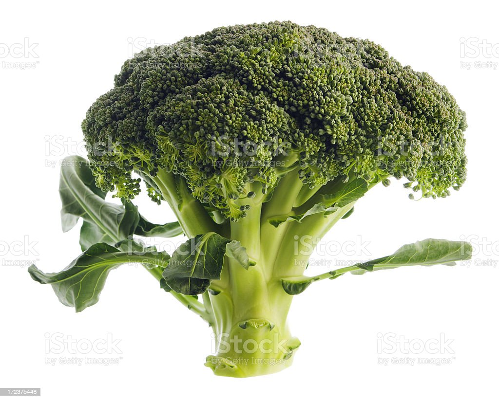 Broccoli Isoated on White Background royalty-free stock photo