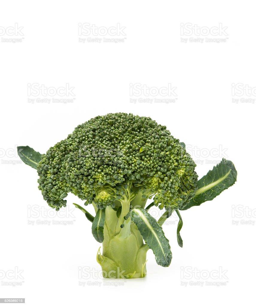 Broccoli isolated on white background stock photo