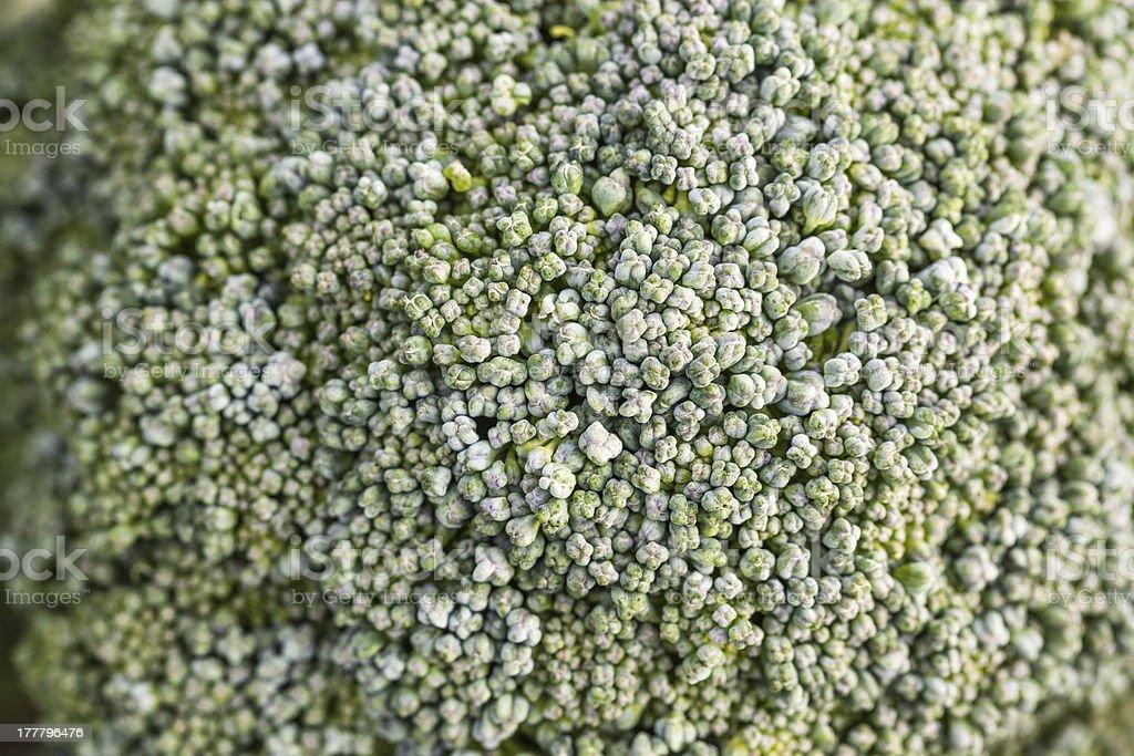 broccoli macro shoot royalty-free stock photo