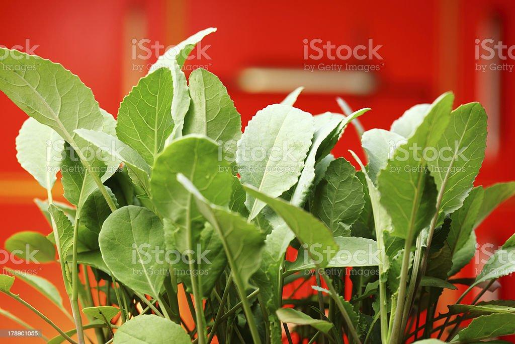 Broccoli Seedlings in Kitchen Garden royalty-free stock photo