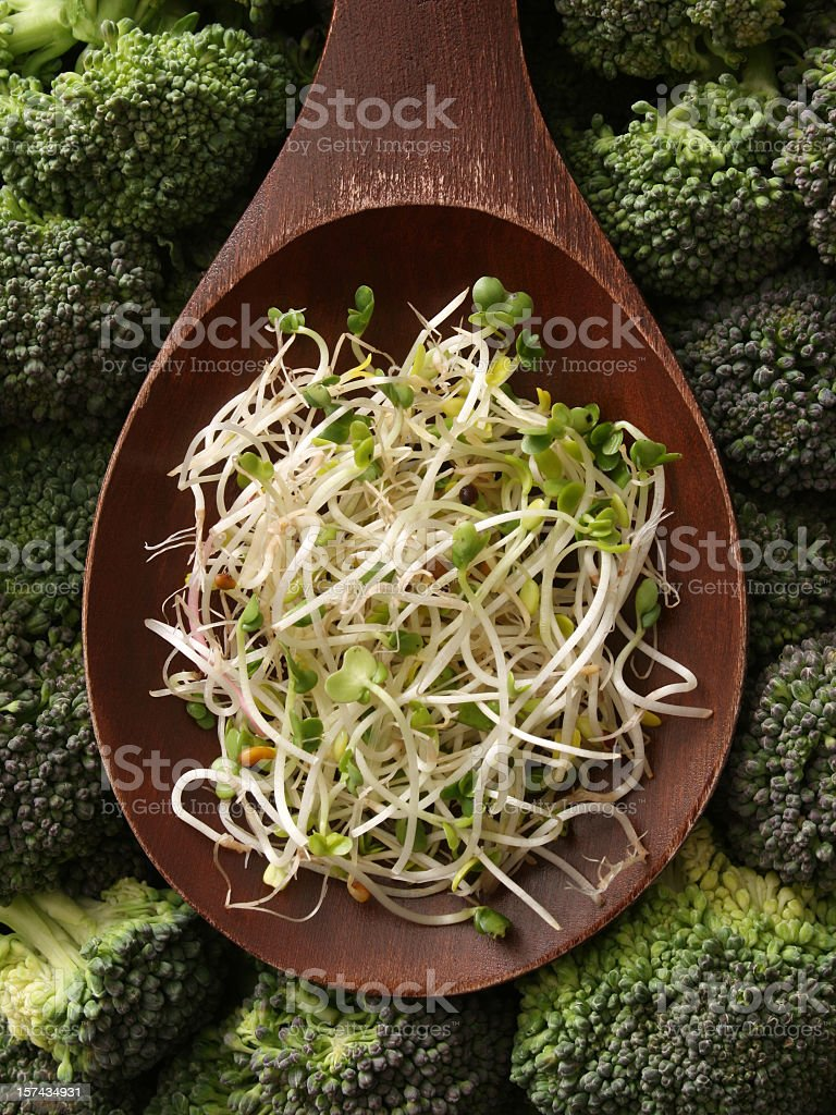 Broccoli sprouts royalty-free stock photo