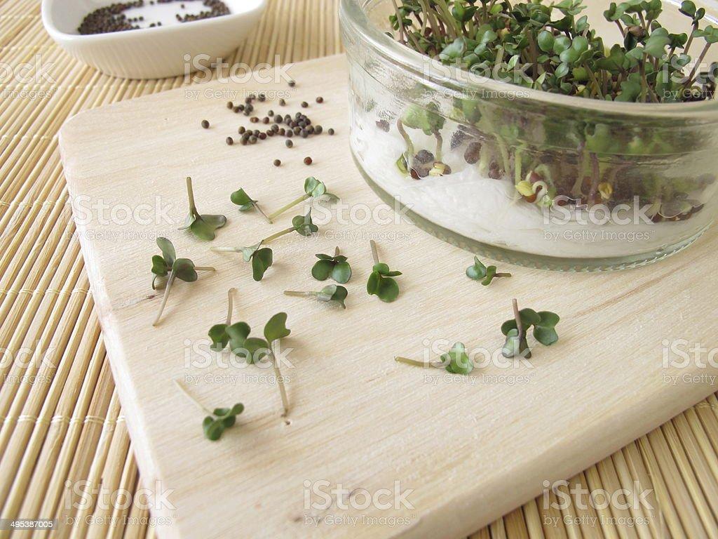 Broccoli sprouts stock photo