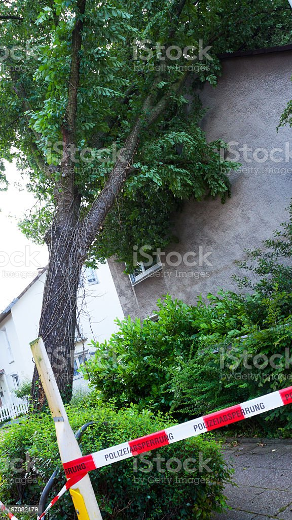 Broken and disrooted tree stock photo