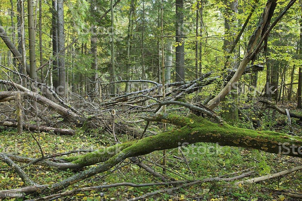 Broken branches lying stock photo