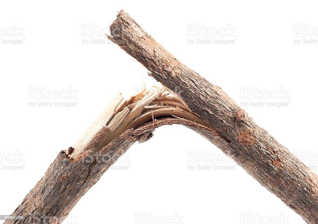 Broken Branches stock photo