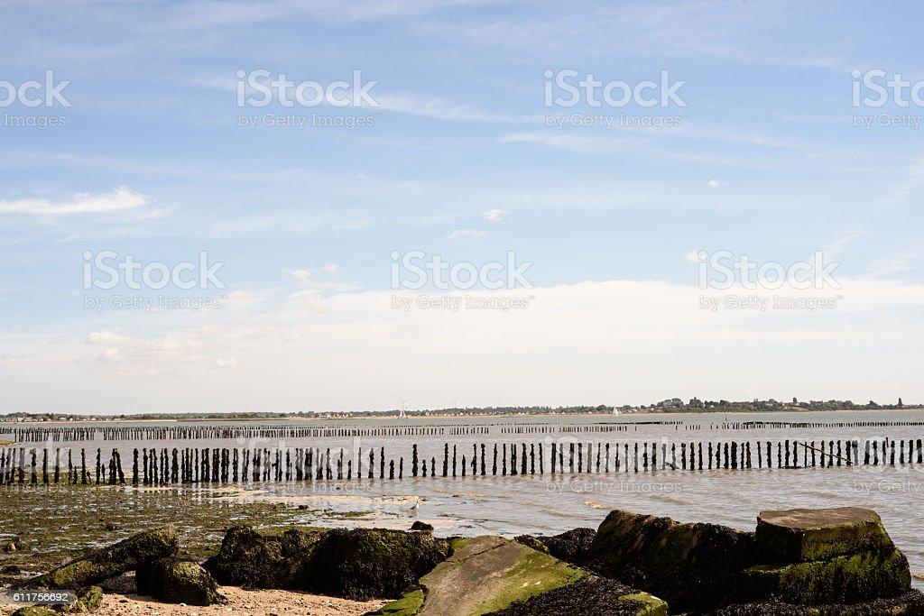 Broken Defences and Wooden Poles on Mersea Island stock photo