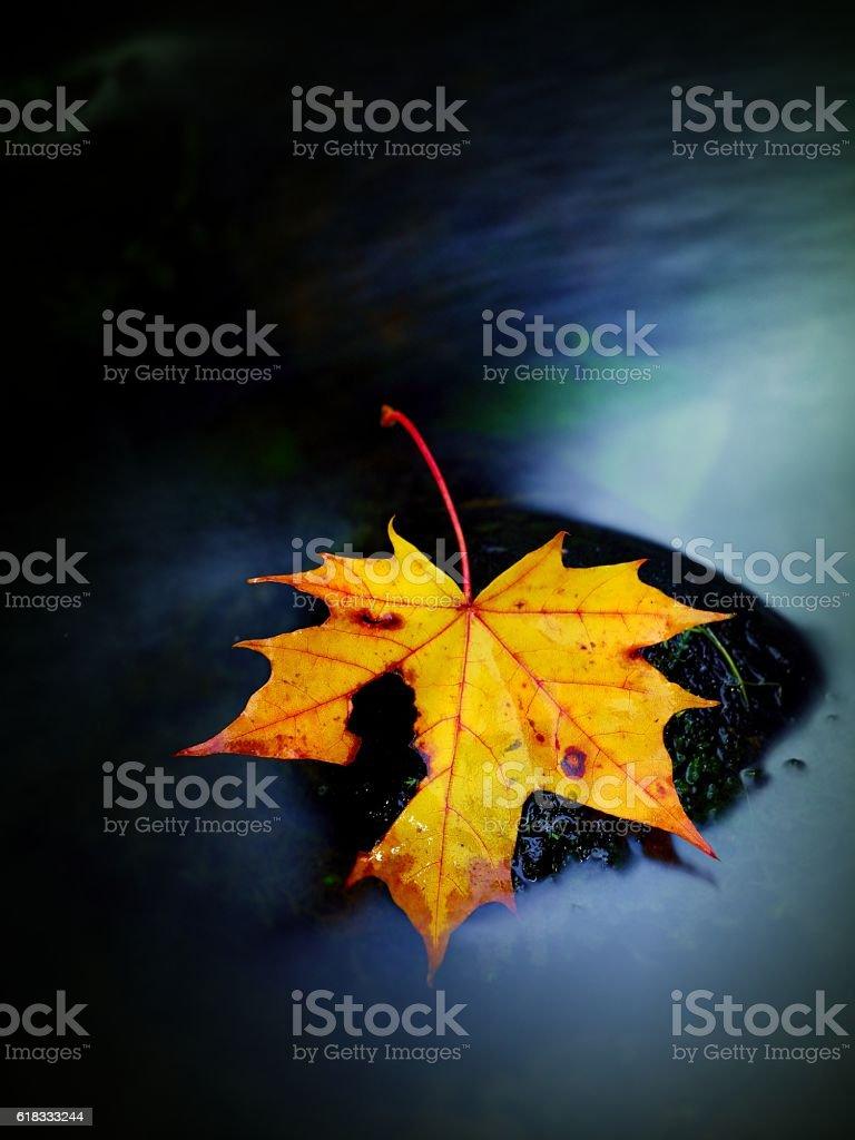 Broken fallen maple leaf on slippery basalt stone,  smoky water. stock photo