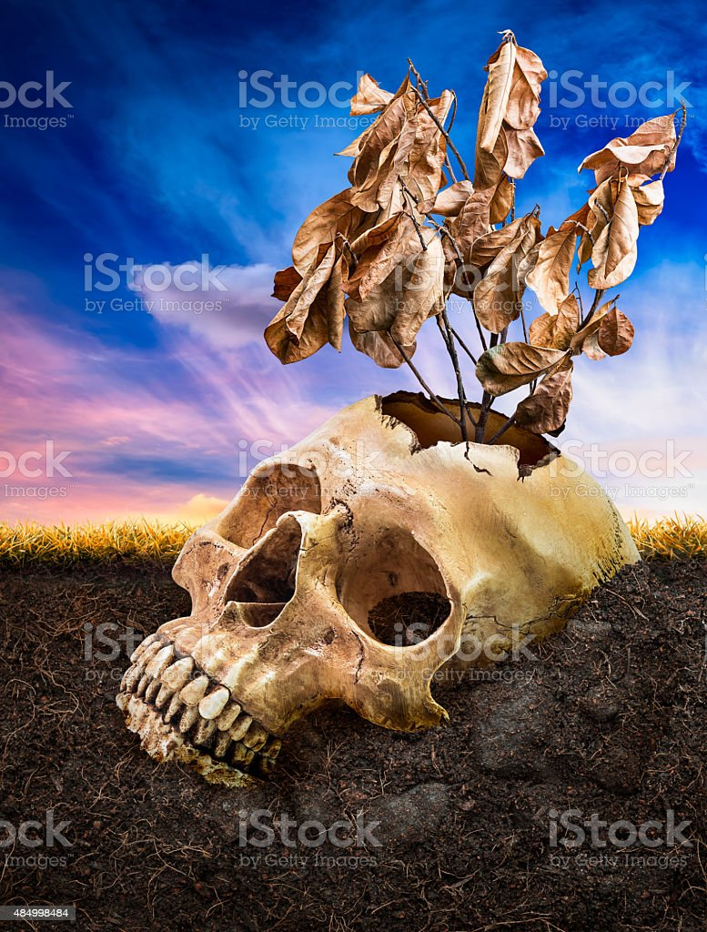 Broken human skull bury underground stock photo