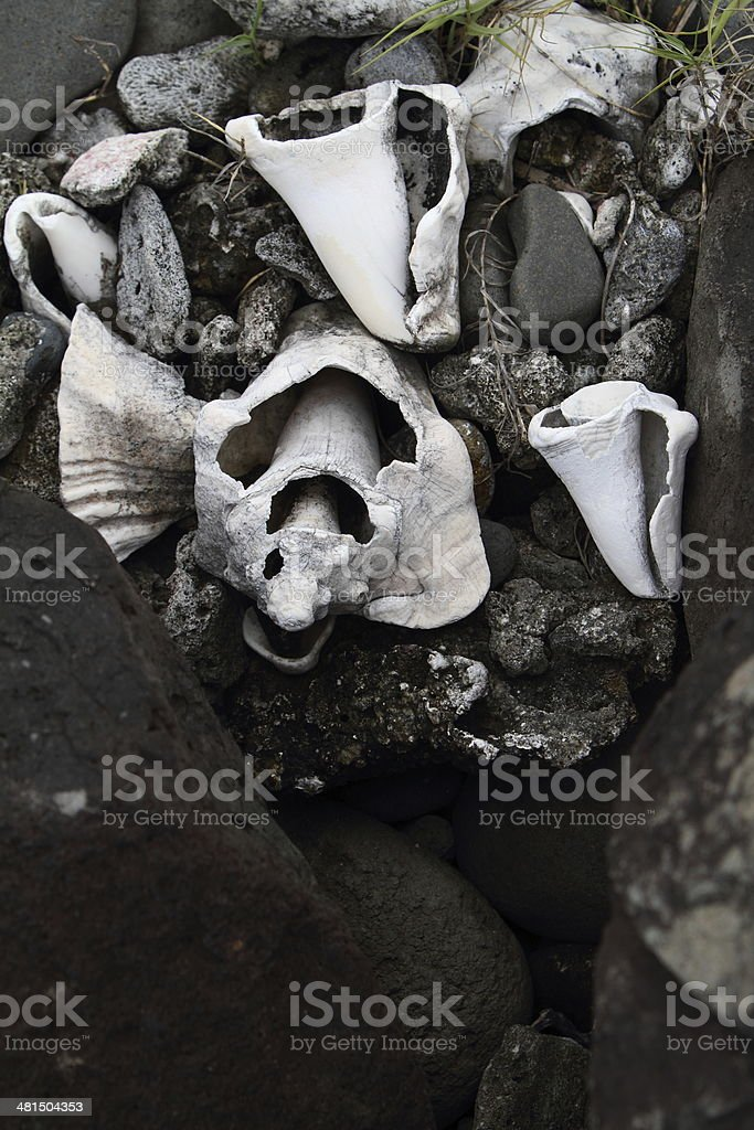 Broken Lambie shells stock photo