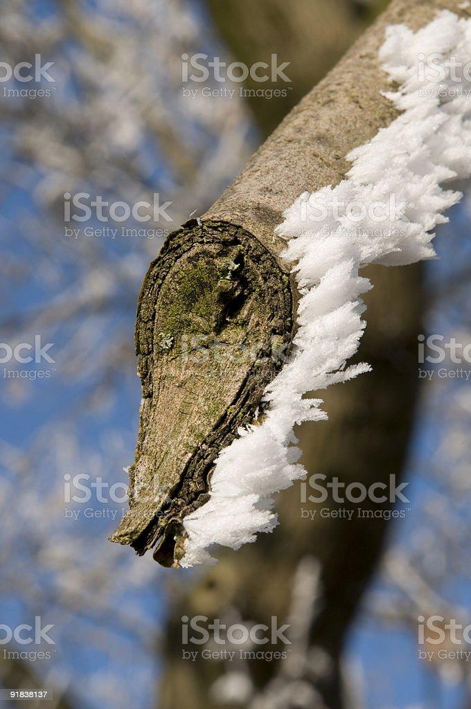 broken limb with frozen snow stock photo
