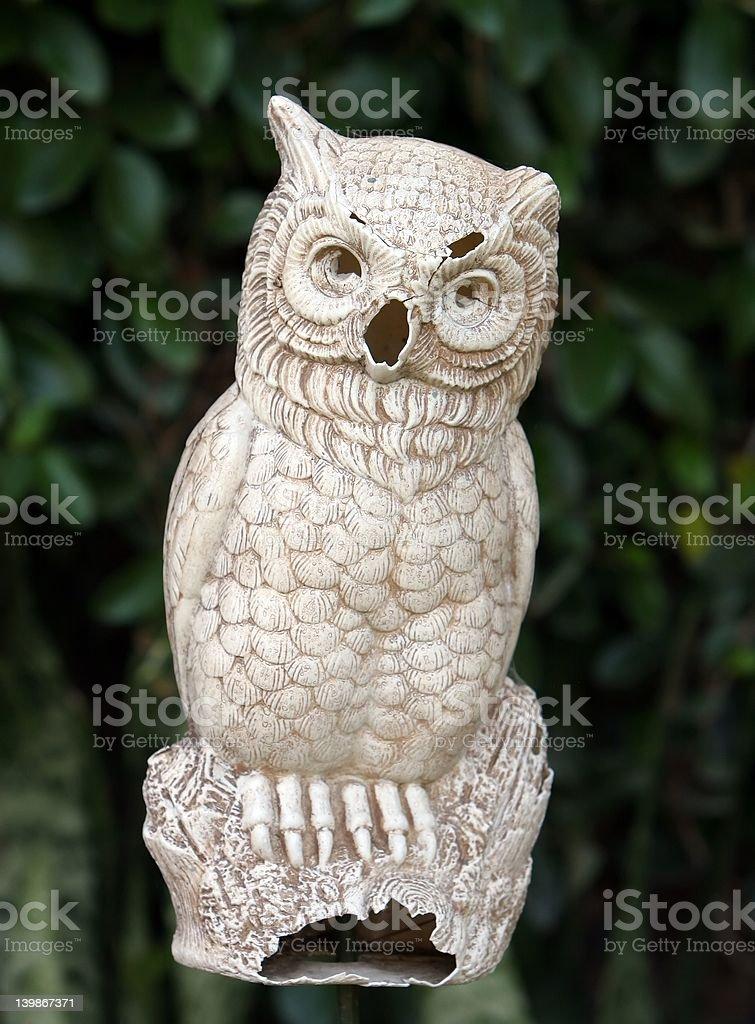 Broken Owl stock photo
