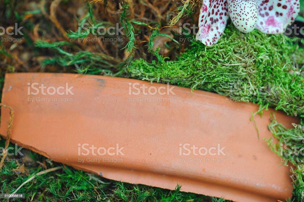 Broken piece of pot stock photo