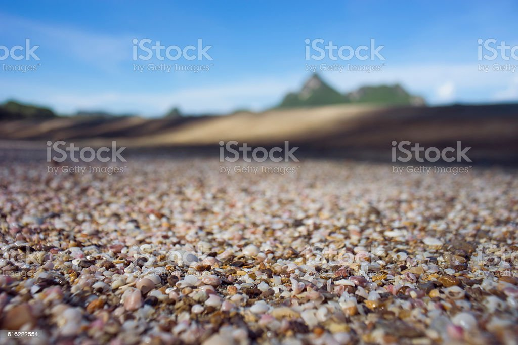broken small corals, scrap of sea shell on the sand stock photo