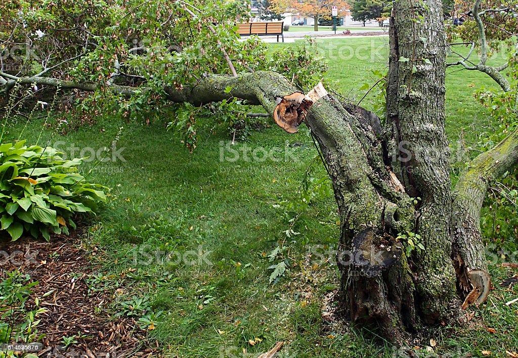 Broken tree from storm damage stock photo