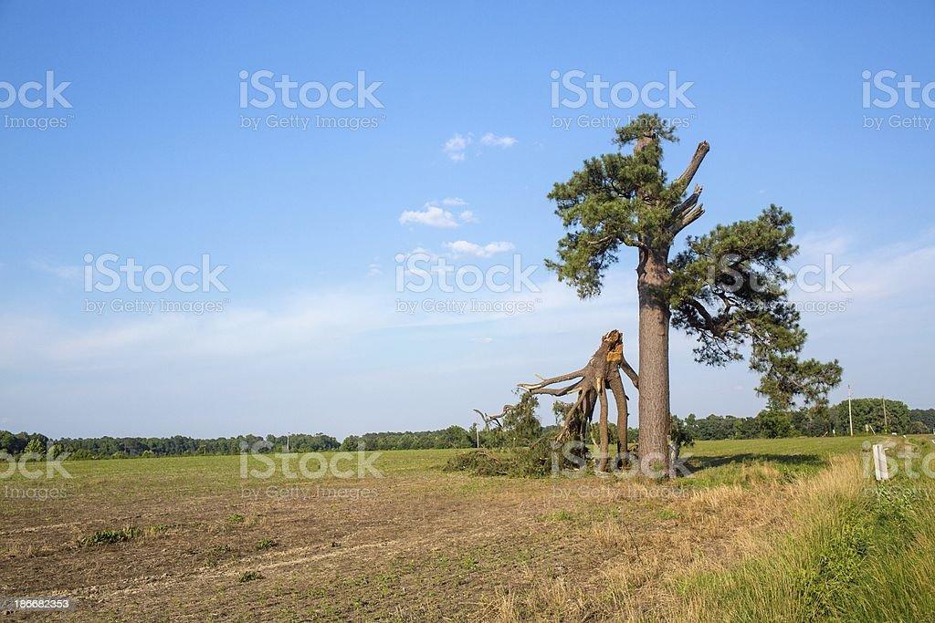 Broken tree in open field with blue skies stock photo
