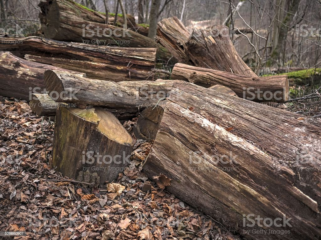 Broken tree in the mountain wood stock photo