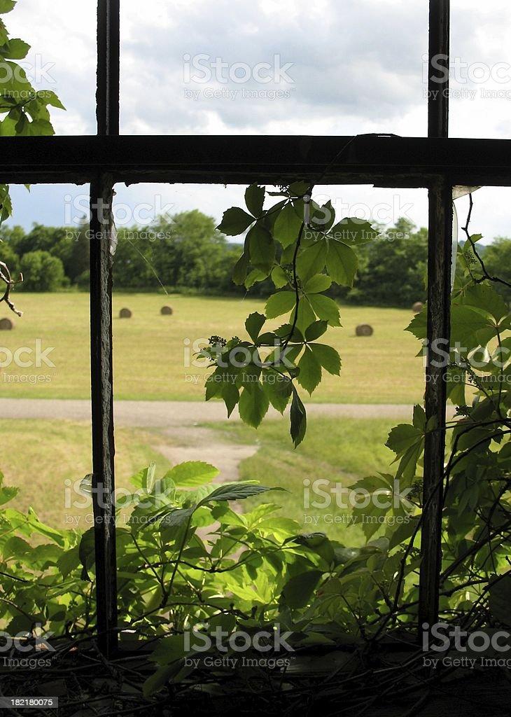 Broken Window with Vines royalty-free stock photo