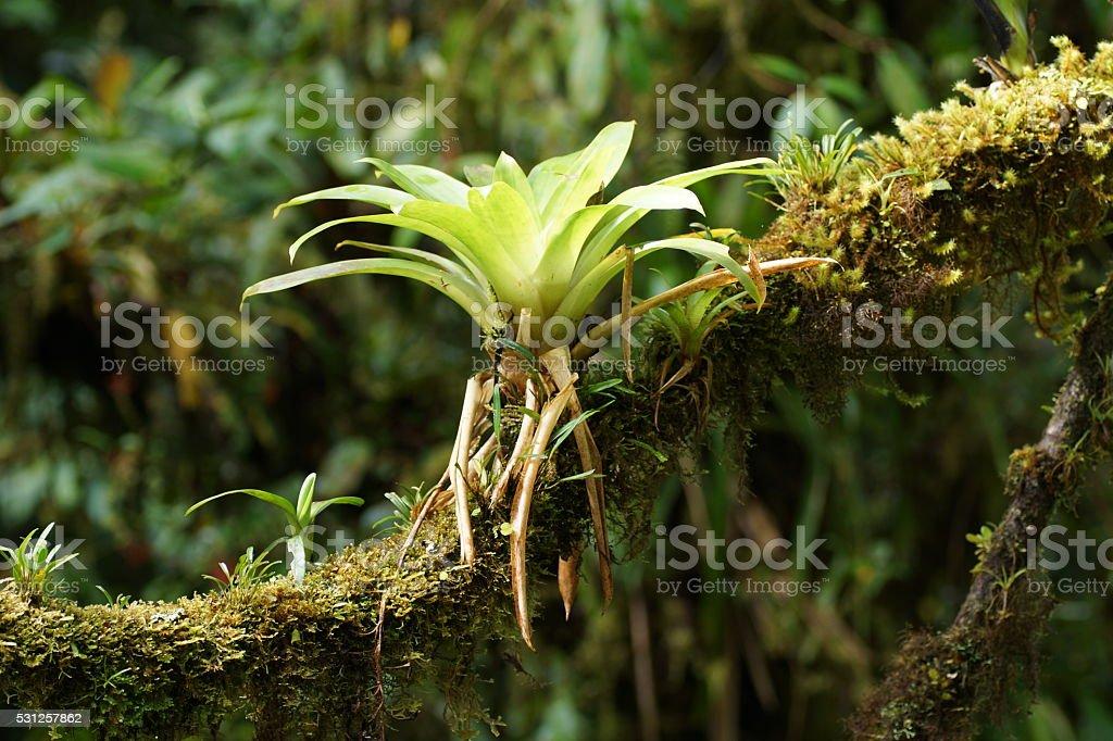 Bromeliad on a tree branch. stock photo