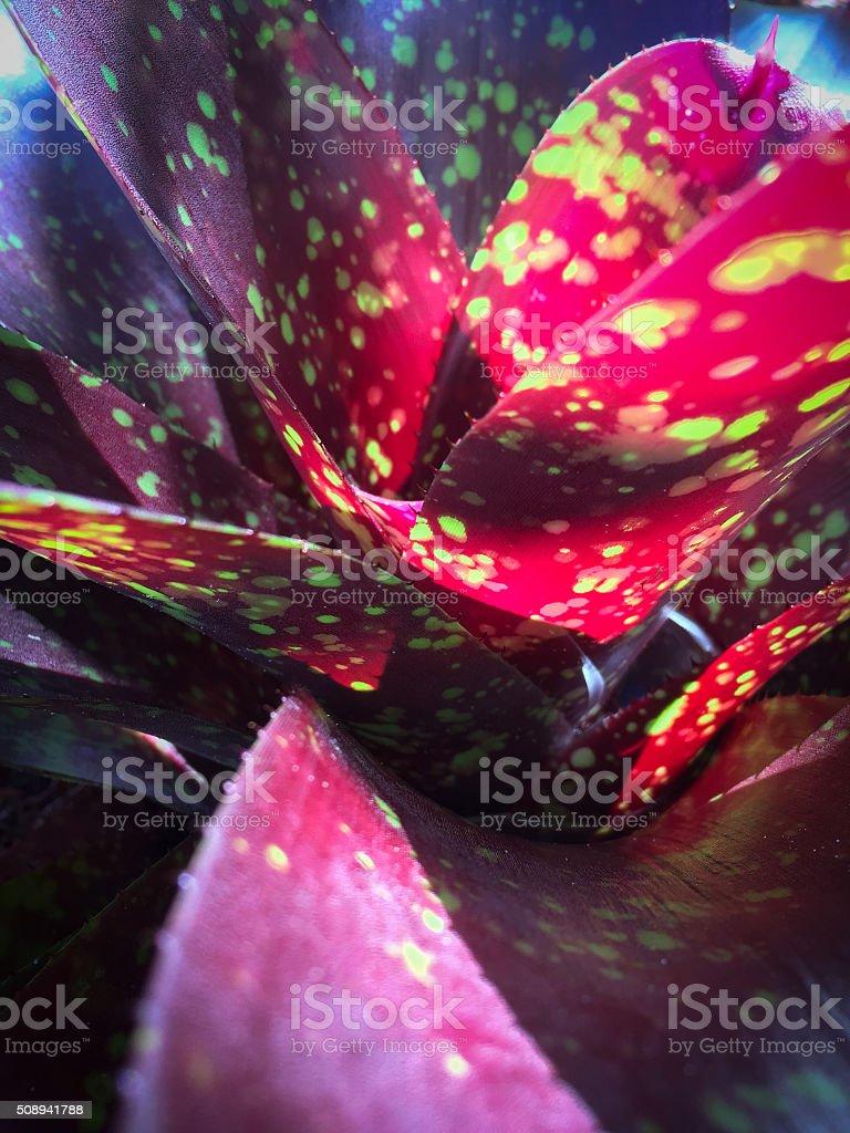 Bromeliad stock photo