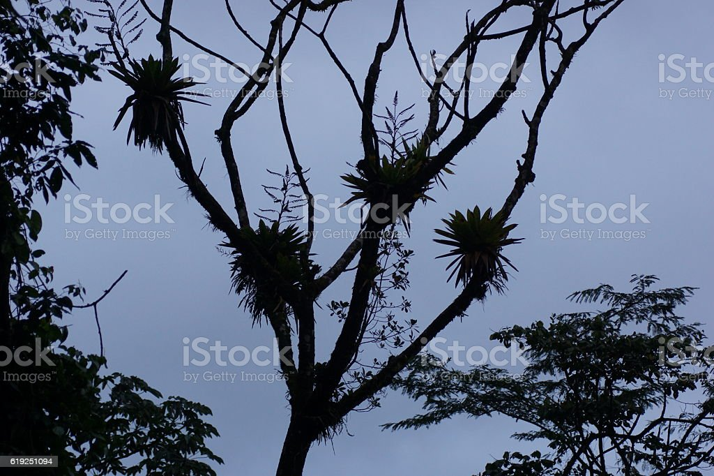 Bromeliads on tree stock photo