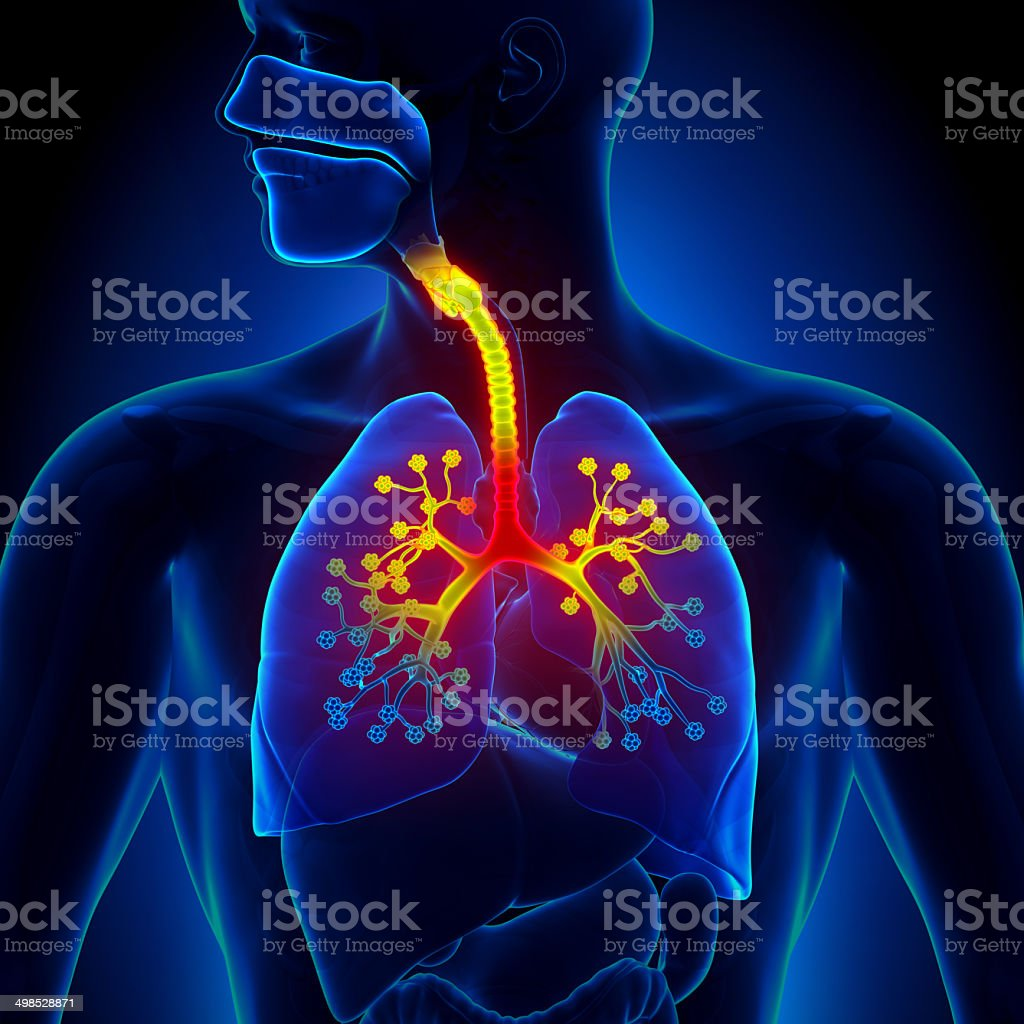 Bronchiolitis - Inflammation of the bronchioles stock photo