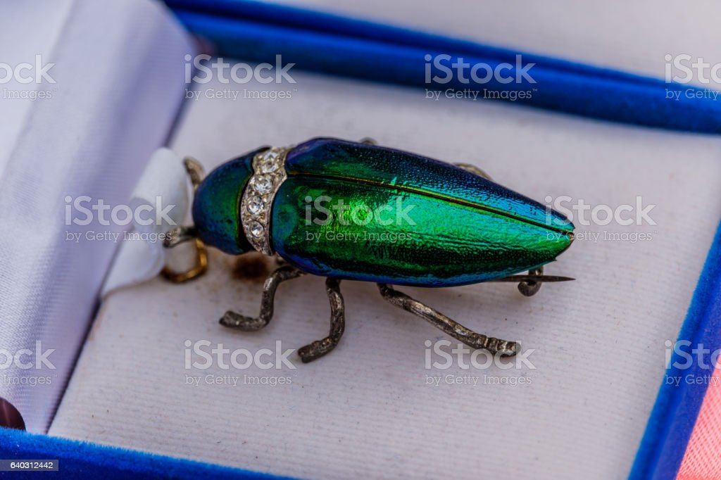 Brooch jewelry from metallic wood-boring beetle stock photo