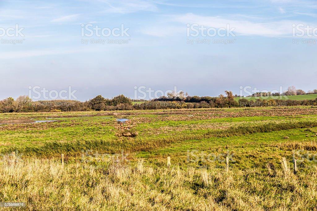 Brood-areas of the Geltinger Birk stock photo