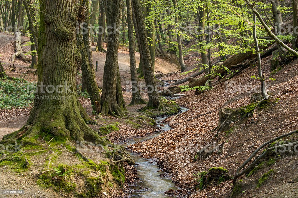Brook in a forest stock photo
