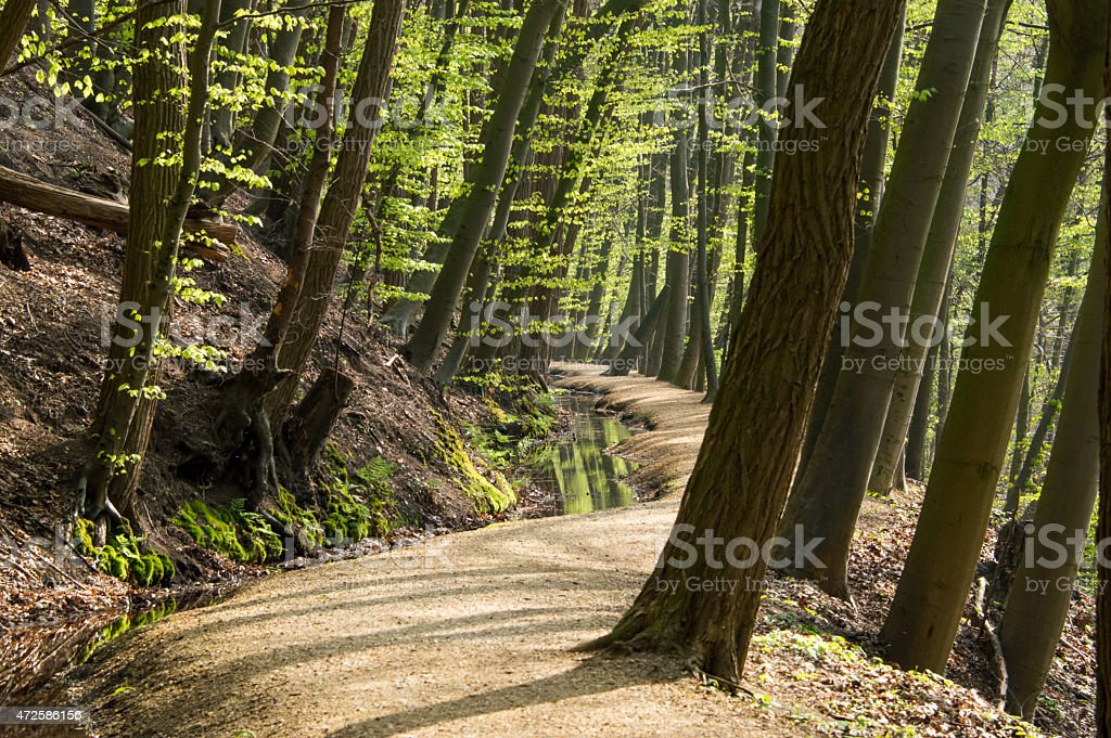 Brook in a wood stock photo