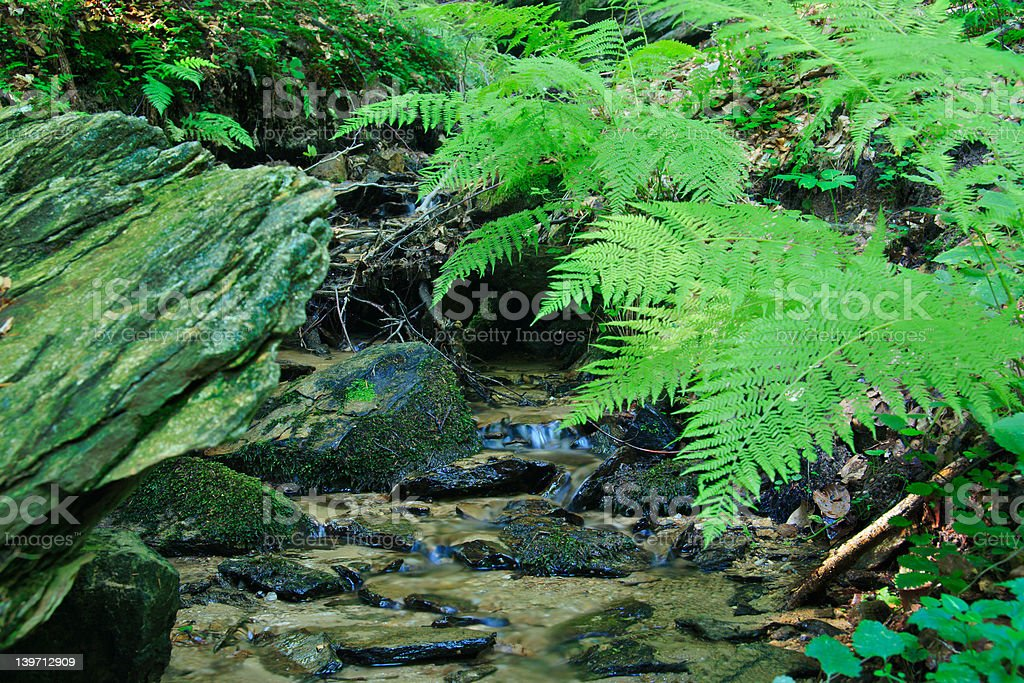 Brook in the forest with some fern next to it royalty-free stock photo