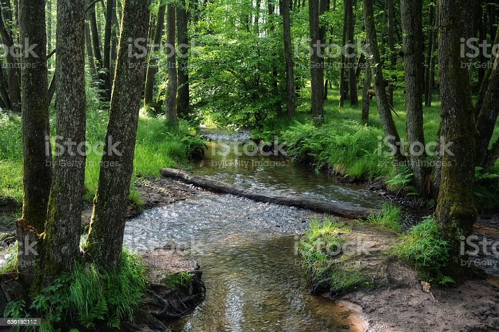 brook in the woods in the morning stock photo