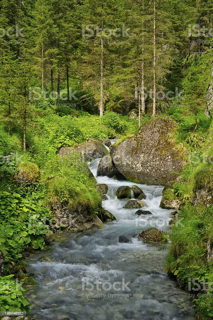 Brook in the woods royalty-free stock photo