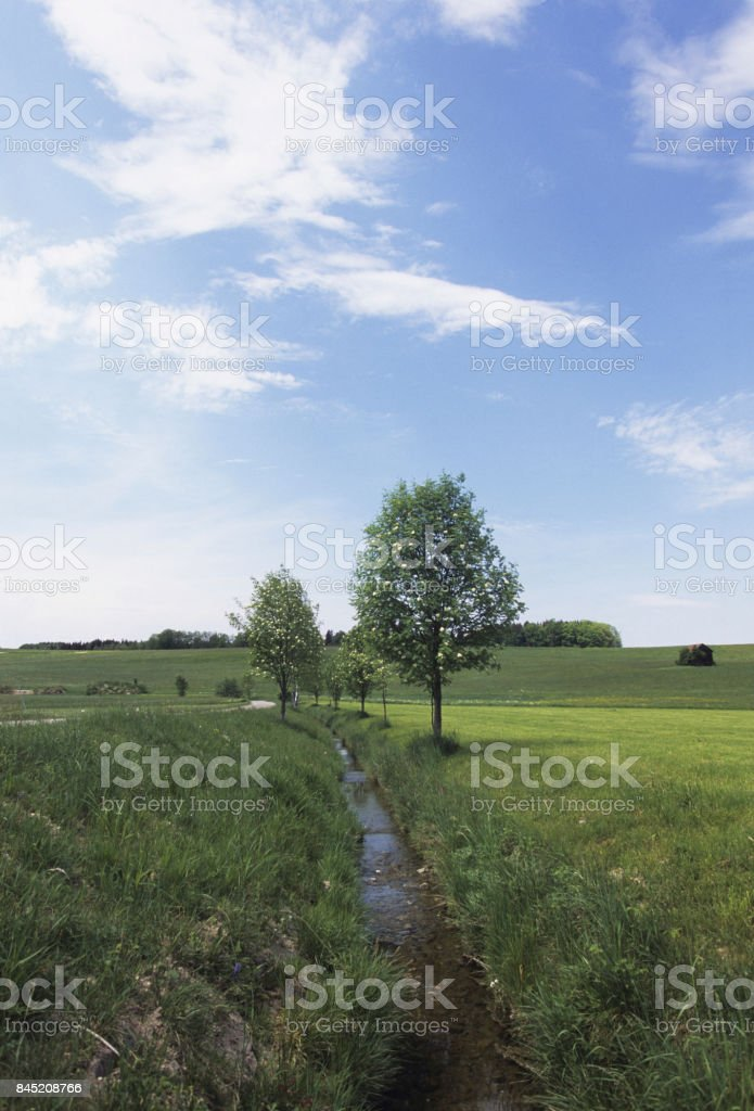 Brook wood stock photo
