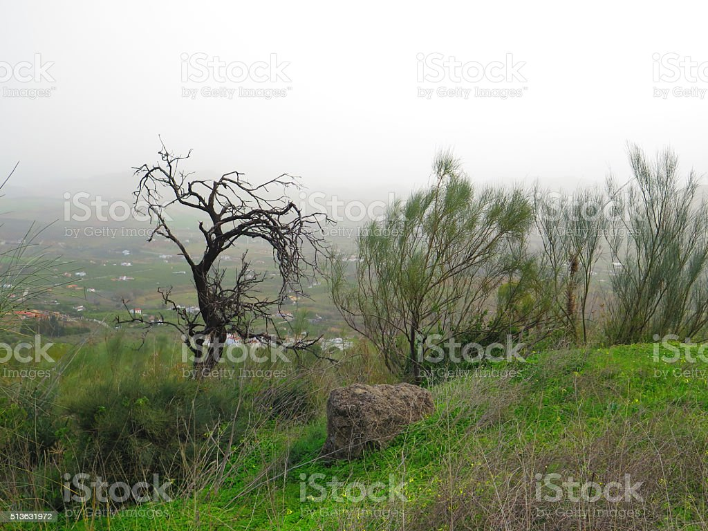 Broom and dead almond tree stock photo