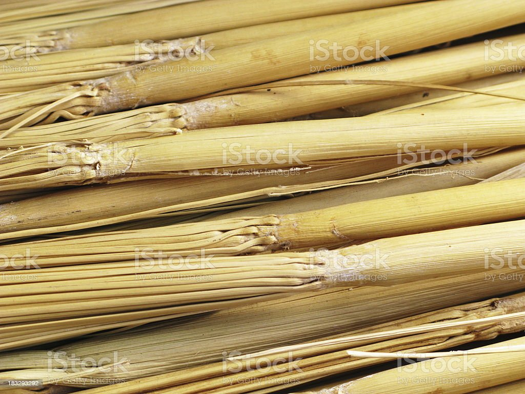 Broom Bristles Broomcorn Sorghum stock photo