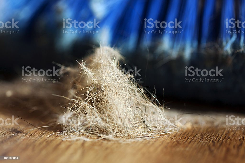 Broom, Dust and Fur Ball on Parquet Floor royalty-free stock photo