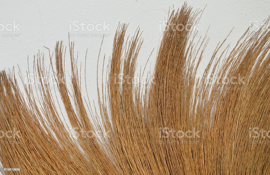 broom grass texture and background on white wall stock photo