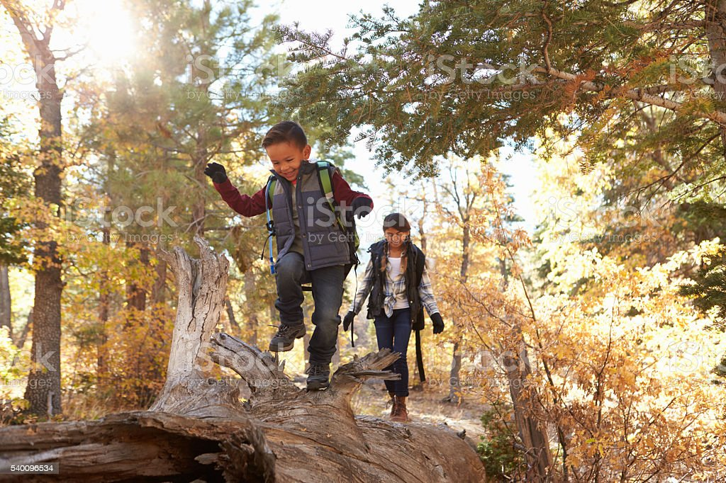 Brother and sister walking along a fallen tree in a forest stock photo
