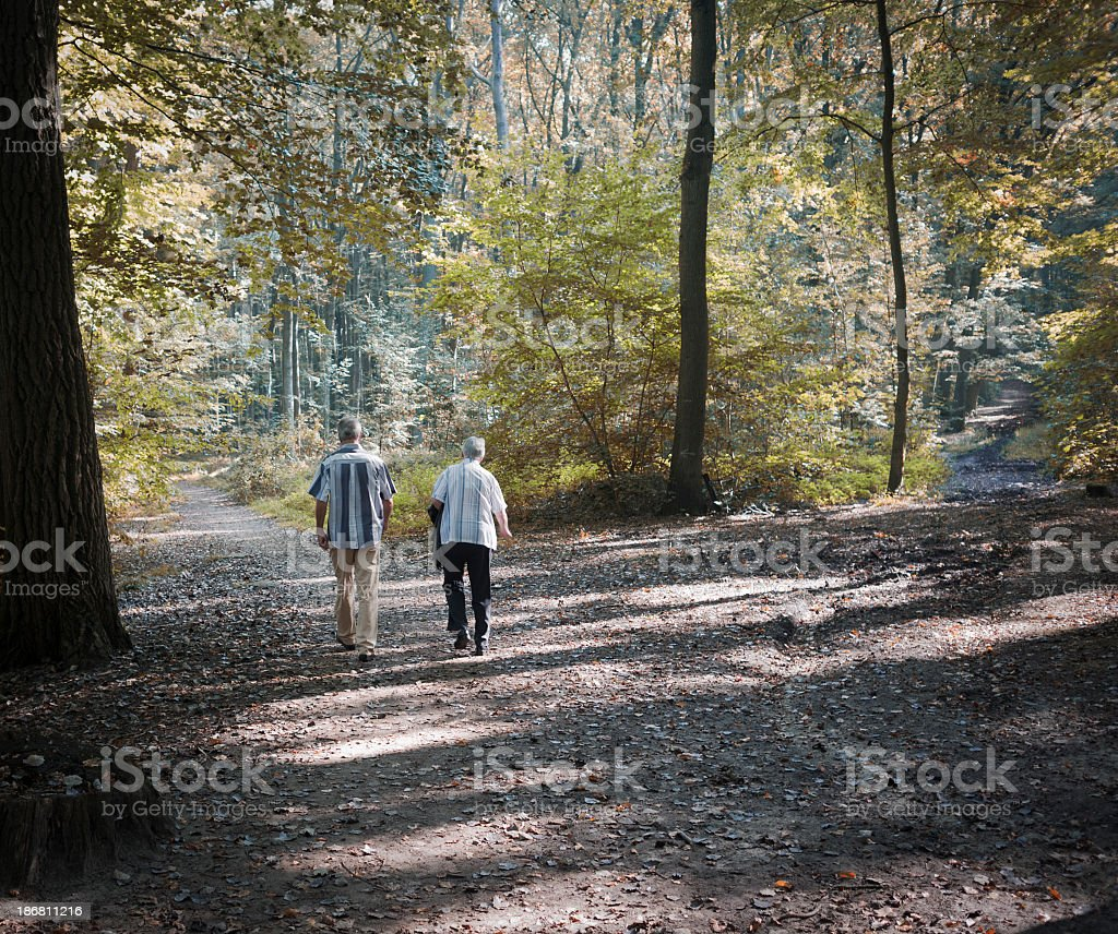 Brother and sister walking in the forest royalty-free stock photo