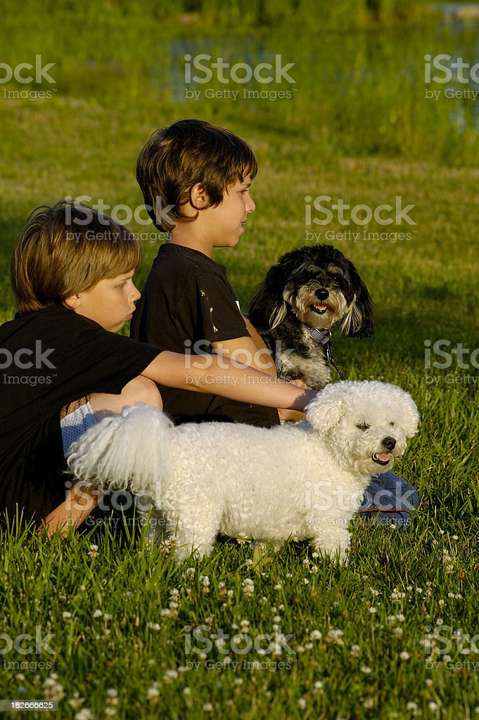 Brothers and Their Dogs stock photo