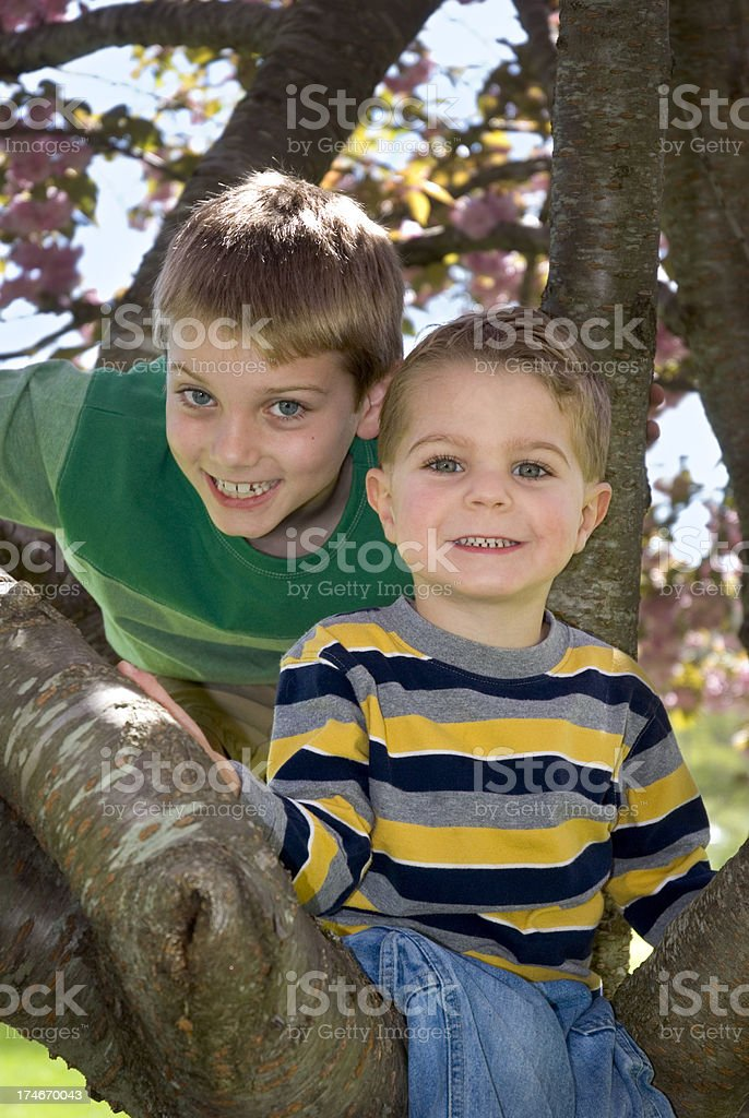 Brothers / Boys  Climbing Tree With Spring Blossoms & Flowers royalty-free stock photo