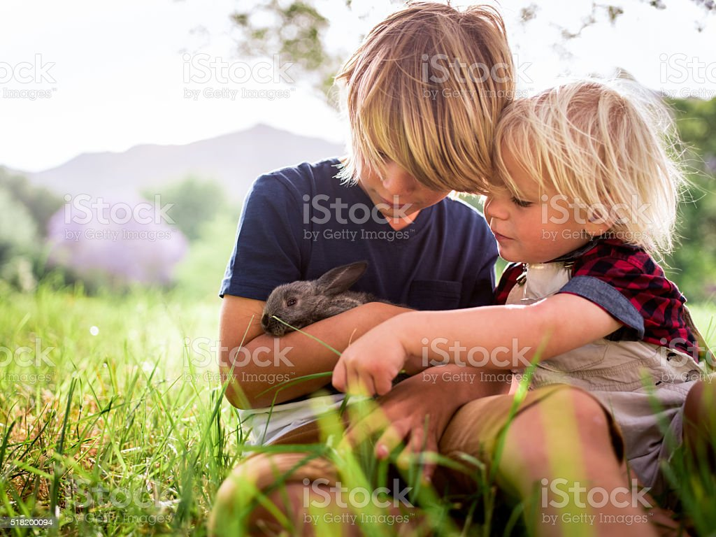 Brothers holding and feeding a cute bunny at park stock photo
