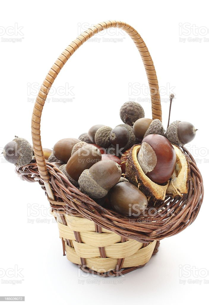 Brown acorns and chestnut in wicker basket on white background royalty-free stock photo