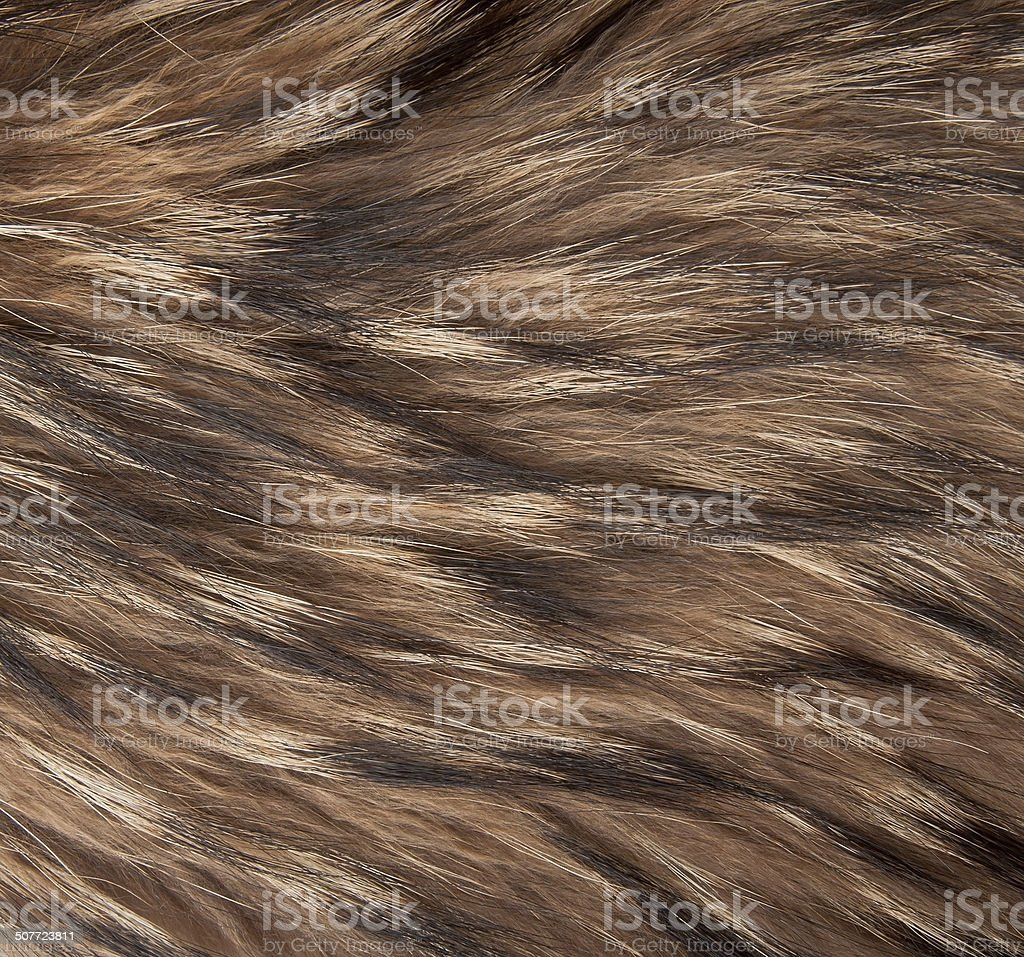 brown and black and white animal fell texture stock photo