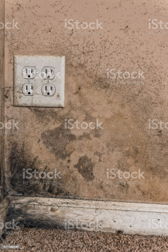 Black Mold In Walls brown and black mold on basement walls of a home stock photo